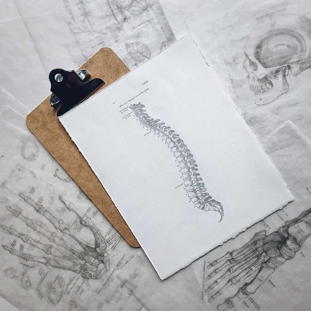 Illustration of spine on a clipboard representing chiropractic school